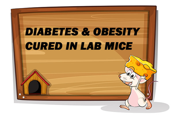 cure-for-obesity-diabetes-found-in-lab-mice