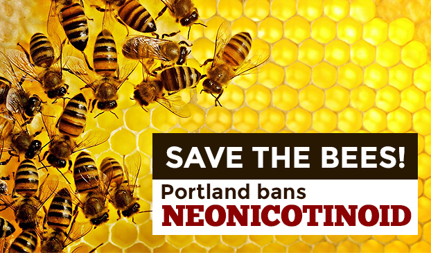 Save bees from colony collapse disorder