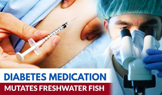 A diabetes medication has mutated fish
