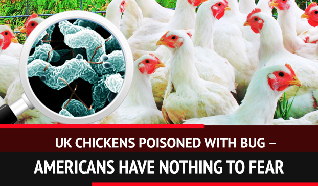 Chickens in the United Kingdom are unsafe to eat at the moment