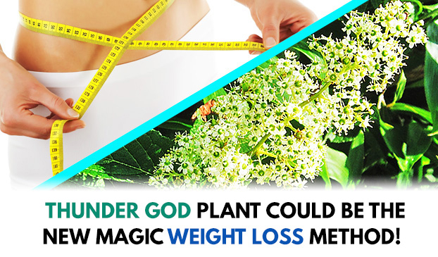 An extract from a rare plant could cure obesity