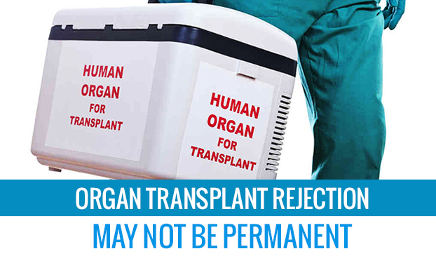 Organ transplant rejection may not be permanent