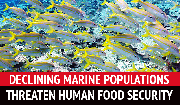 Decrease In Ocean Life Populations Caused By Overfishing, And Acidification Puts Human Food Security In Danger