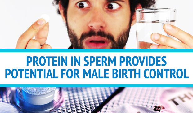 An Experiment With Mice Found Contraceptives For Men Could Be Derived From Sperm Calcineurin