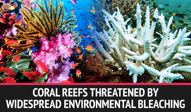 Rising Temperatures Threaten Coral Reefs With Environmental Bleaching