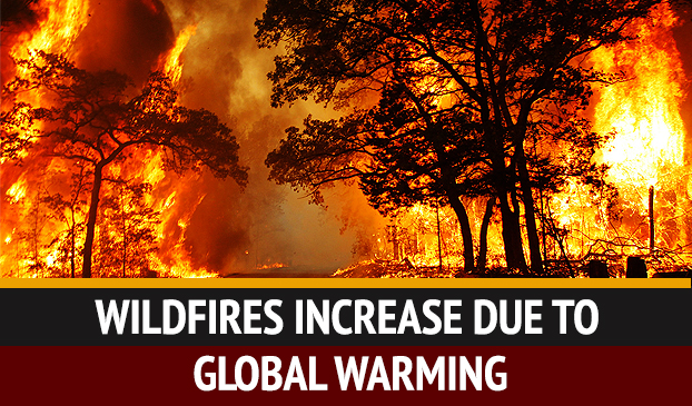 Climate Change Linked To Increase In Wildfire Frequency And Intensity